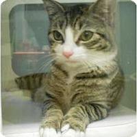Adopt A Pet :: Peggy - Maywood, NJ