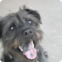Adopt A Pet :: Charlie-Prison Obedience Train - Hazard, KY