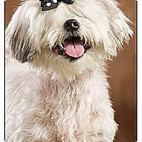 Adopt A Pet :: Princess - Owensboro, KY