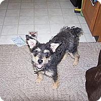 Adopt A Pet :: Astor - Courtesy Post - Dundas, VA