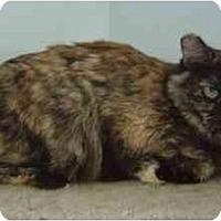 Adopt A Pet :: Rou - Modesto, CA