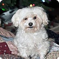 Adopt A Pet :: Priscilla - Blairstown, NJ