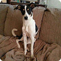Adopt A Pet :: Nellie - Hagerstown, MD
