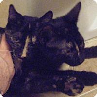 Adopt A Pet :: Bagel & Muffin - Kensington, MD
