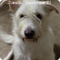 Adopt A Pet :: Libby - Kingwood, TX