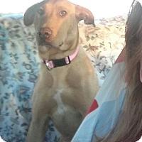 Adopt A Pet :: Rosie - Bedminster, NJ