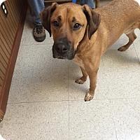 Adopt A Pet :: Calvin - Arden, NC