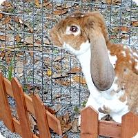 Adopt A Pet :: Winchester - Williston, FL