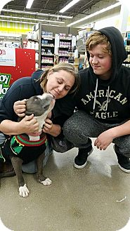 Pit Bull Terrier Dog for adoption in Odessa, Texas - Hope