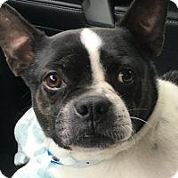 Adopt A Pet :: Lucas - Jackson, TN