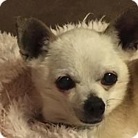 Adopt A Pet :: Frosty the Snowman - Shawnee Mission, KS