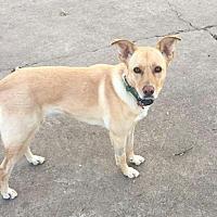 Adopt A Pet :: Mattie - Rowlett, TX
