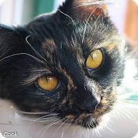 Adopt A Pet :: Peppermint Patty - Ann Arbor, MI