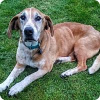 Adopt A Pet :: Wally - Eldora, IA