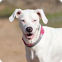 Adopt A Pet :: Pixie - Washoe Valley, NV