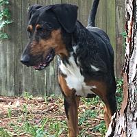 Adopt A Pet :: RAINEY - Odessa, FL