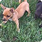 Adopt A Pet :: Almond RBF
