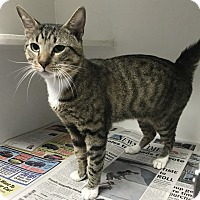 Adopt A Pet :: Big Slick - Newport, NC