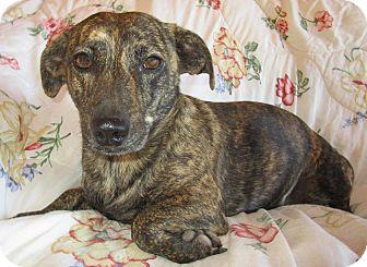 Dachshund Mix Dog for adoption in Melbourne, Arkansas - Sophie