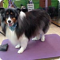 Adopt A Pet :: Patches - COLUMBUS, OH