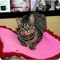 Adopt A Pet :: Dottie - Farmingdale, NY