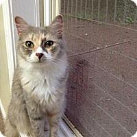 Adopt A Pet :: Ayla - Monroe, GA