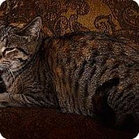 Adopt A Pet :: Sandy - Syracuse, NY