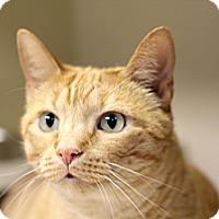 Adopt A Pet :: Adon - Chicago, IL