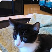 Adopt A Pet :: Jitterbug - Scottsdale, AZ
