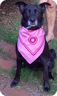 Labrador Retriever/Labrador Retriever Mix Dog for adoption in Decatur, Georgia - Molly
