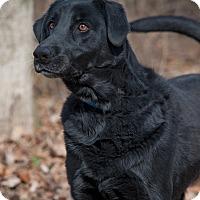 Adopt A Pet :: Zeke - Lewisville, IN