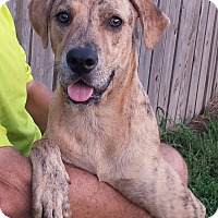 Adopt A Pet :: Tucker - Orange Lake, FL