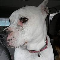 Adopt A Pet :: Momma Roxy - Jetersville, VA