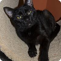 Adopt A Pet :: Miss Pretty - Michigan City, IN