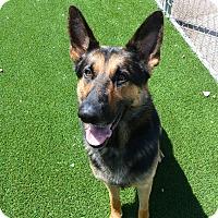 Adopt A Pet :: Kilo - Meridian, ID