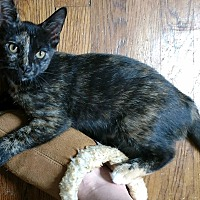 Adopt A Pet :: McGonagall - Richmond, VA