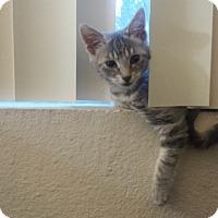 Adopt A Pet :: pip - Sacramento, CA