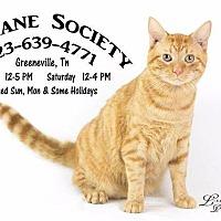 Adopt A Pet :: Sunshine - Greeneville, TN