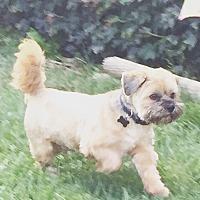 Adopt A Pet :: Ewok - Rancho Cucamonga, CA