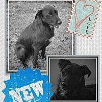 Adopt A Pet :: Hunter - Ogden, UT