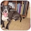 Photo 4 - American Pit Bull Terrier Mix Dog for adoption in Reisterstown, Maryland - Harriet