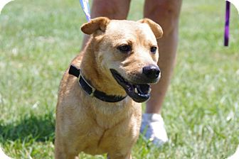 Chow Chow Mix Dog for adoption in Elyria, Ohio - Howie-Prison Dog