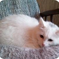 Adopt A Pet :: Nicole - Anchorage, AK