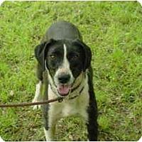 Adopt A Pet :: Sophie - Russellville, AR