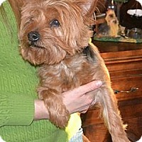 Adopt A Pet :: Will - Greensboro, NC
