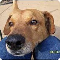 Adopt A Pet :: Romeo - York, SC