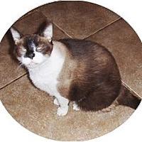 Adopt A Pet :: Binks - Chandler, AZ