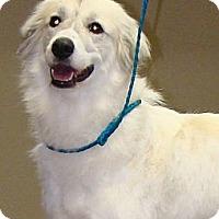 Adopt A Pet :: Gracie  *Adopted - Tulsa, OK