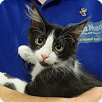 Adopt A Pet :: RIVER - Diamond Bar, CA