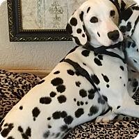 Adopt A Pet :: Danny - Newcastle, OK